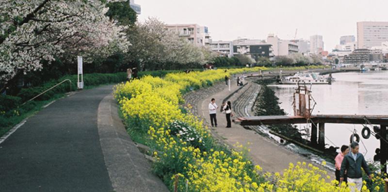 >イベント20 しながわ花海道