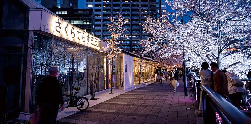 >イベント2 五反田ふれあい水辺広場さくらのライトアップ