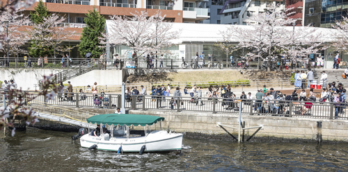 >イベント18:目黒川さくらまつり